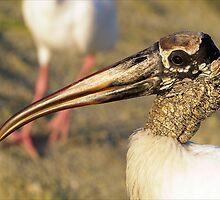Golden Beak by Donnie Shackleford