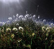 Dark Willow by oztiger