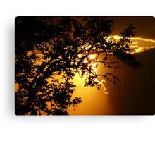 Sunset at Brazilian savannah Canvas Print