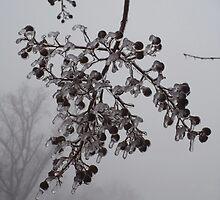 Iceberrys by Esther Elvinsdotter