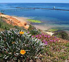 Port Noarlunga flowers and jettty by robertcroa