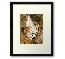 Sea Snail Framed Print