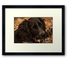 Toddy  Framed Print