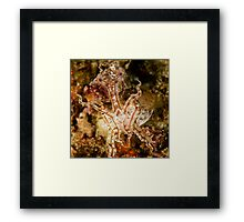Pissed Cuttlefish Framed Print