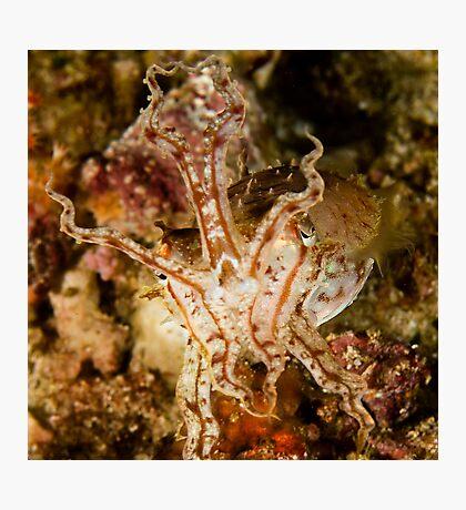 Pissed Cuttlefish Photographic Print