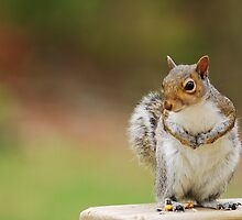 Squirrel in Maryland by Dusker