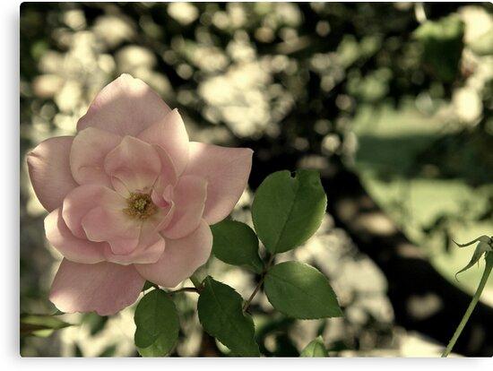 solo flower by Cricket Jones