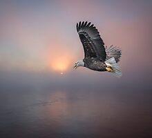 Soaring At Sunrise by Thomas Young
