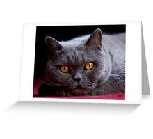 Eye Contact Greeting Card