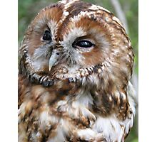 Adult Tawny Owl Photographic Print