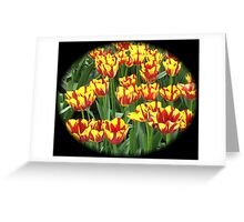Flamboyant Two-Tone Tulips - Keukenhof Gardens Greeting Card