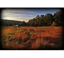 Fall Morning Golden Hour Photographic Print