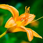 Daylily  and The Little Bug by georgiaart1974