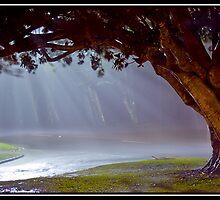 Tree of life by TedVanderloo