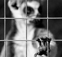 Captive by Photoshopped