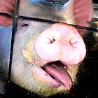 Pig Kiss by soulphoto