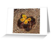 Baby Mockingbirds  Greeting Card