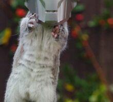 Cyber Squirrel! Sticker