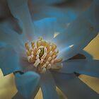 Miss Magnolia by Sue Morgan