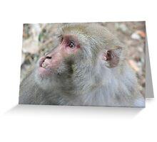 monkey. dharamsala, india Greeting Card
