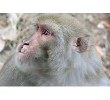 monkey. dharamsala, india Photographic Print