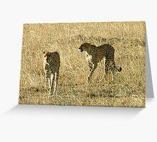 Cheetahs on Patrol - Masai Mara Greeting Card