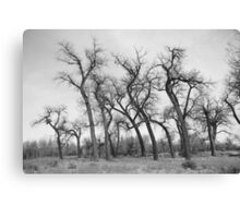 Winter Dance of the Tall Trees  Canvas Print