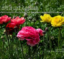 A life is like a garden… by Celeste Mookherjee