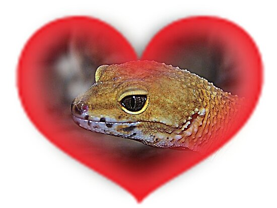 Orange Gecko In Red Heart by Jonice