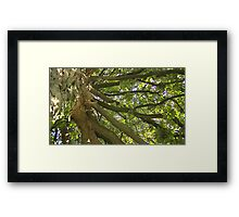 Windy Day - The Blue & The Green 012 Framed Print