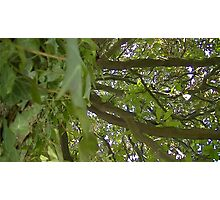 Windy Day - The Blue & The Green 013 Photographic Print