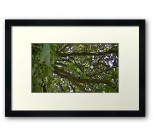 Windy Day - The Blue & The Green 014 Framed Print