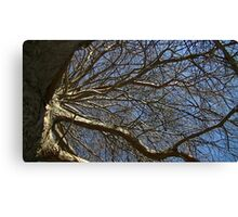 Windy Day - The Blue & The Green 016 Canvas Print