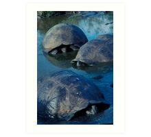 Galapagos Tortoises in Pond Art Print