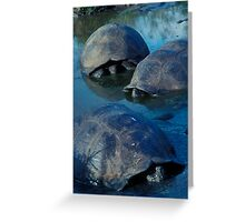 Galapagos Tortoises in Pond Greeting Card