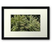 Windy Day - The Blue & The Green 021 Framed Print