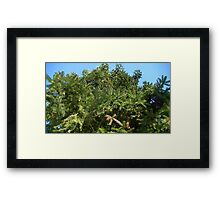 Windy Day - The Blue & The Green 024 Framed Print