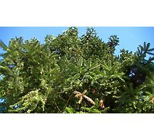 Windy Day - The Blue & The Green 024 Photographic Print