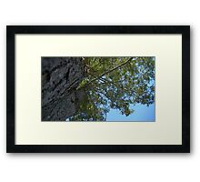 Windy Day - The Blue & The Green 025 Framed Print