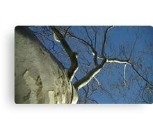 Windy Day - The Blue & The Green 031 Canvas Print