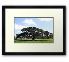 favourite tree Framed Print