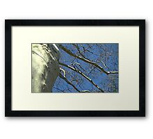 Windy Day - The Blue & The Green 033 Framed Print