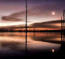 Sunrise In The Cypress II by ladywings