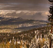 Winter in the Sierra Nevada Foothills by Paul J. Owen