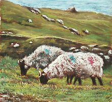 Sheep on Achill by Alice McMahon