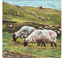 Sheep on Achill Photographic Print
