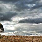 OneTree Hill by sparrowhawk