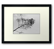 Chilly Maine Morning Framed Print