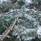 Ice Sheathed Pine by SpiritFox