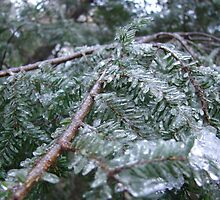 Ice Sheathed Pine by SpiritFox
